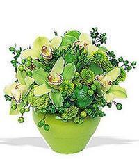 cam yada mika vazoda 5 adet orkide   Kırklareli online çiçek gönderme sipariş
