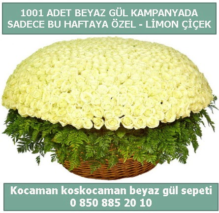 1001 adet beyaz gül sepeti özel kampanyada  Kırklareli uluslararası çiçek gönderme