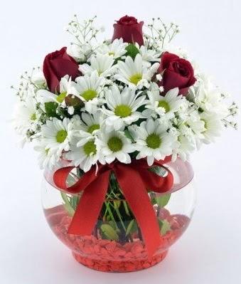 Fanusta 3 Gül ve Papatya  Kırklareli online çiçekçi , çiçek siparişi