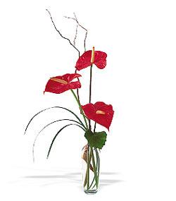 Kırklareli yurtiçi ve yurtdışı çiçek siparişi  cam yada mika Vazoda 3 adet  antoryum