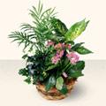 Kırklareli çiçek online çiçek siparişi  5 adet canli çiçek sepette
