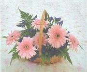 gerbera çiçeklerinde sepet   Kırklareli 14 şubat sevgililer günü çiçek