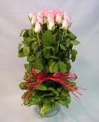 13 adet pembe gül silindirde   Kırklareli 14 şubat sevgililer günü çiçek