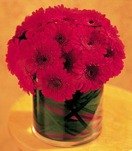 Kırklareli çiçek mağazası , çiçekçi adresleri  23 adet gerbera çiçegi sade ve sik cam içerisinde