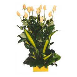12 adet beyaz gül aranjmani  Kırklareli çiçekçiler