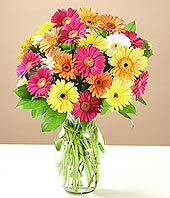 Kırklareli çiçekçi mağazası  17 adet karisik gerbera