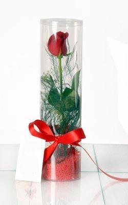 Kırklareli 14 şubat sevgililer günü çiçek  Silindir vazoda tek kirmizi gül