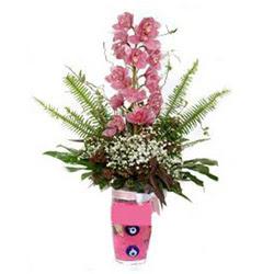 Kırklareli kaliteli taze ve ucuz çiçekler  cam yada mika vazo içerisinde tek dal orkide çiçegi