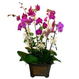 Kırklareli çiçek gönderme  4 adet orkide çiçegi