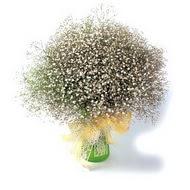 Kırklareli internetten çiçek satışı  cam yada mika vazo içerisinde cipsofilya demeti