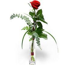 Kırklareli çiçek , çiçekçi , çiçekçilik  Sana deger veriyorum bir adet gül cam yada mika vazoda