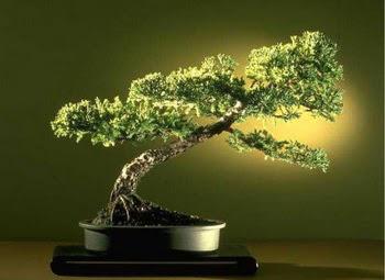 ithal bonsai saksi çiçegi  Kırklareli güvenli kaliteli hızlı çiçek