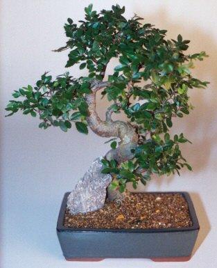 Kırklareli uluslararası çiçek gönderme  ithal bonsai saksi çiçegi  Kırklareli yurtiçi ve yurtdışı çiçek siparişi