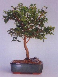 Kırklareli çiçek mağazası , çiçekçi adresleri  ithal bonsai saksi çiçegi  Kırklareli ucuz çiçek gönder