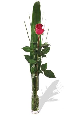 1 adet cam vazo içerisinde kirmizi gül  Kırklareli çiçek servisi , çiçekçi adresleri