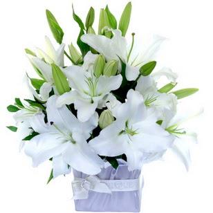 Kırklareli 14 şubat sevgililer günü çiçek  2 dal cazablanca vazo çiçeği