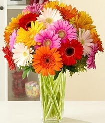 Kırklareli çiçek siparişi sitesi  15 adet gerbera çiçek vazosu