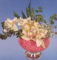 Kırklareli internetten çiçek satışı  Dal orkide kalite bir hediye