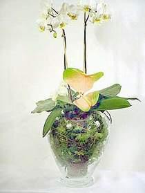 Kırklareli çiçek online çiçek siparişi  Cam yada mika vazoda özel orkideler