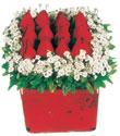 Kırklareli anneler günü çiçek yolla  Kare cam yada mika içinde kirmizi güller - anneler günü seçimi özel çiçek