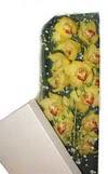 Kırklareli anneler günü çiçek yolla  Kutu içerisine dal cymbidium orkide