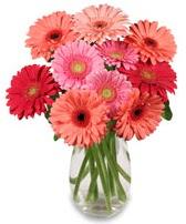 vazo içerisinde 13 adet gerbera çiçeği  Kırklareli yurtiçi ve yurtdışı çiçek siparişi
