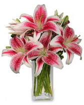 Vazo içerisinde 5 dal kazablanka çiçeği  Kırklareli çiçekçi telefonları