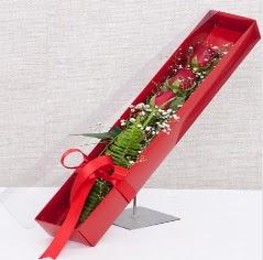 Kutu içerisinde 3 adet kırmızı gül  Kırklareli çiçek yolla