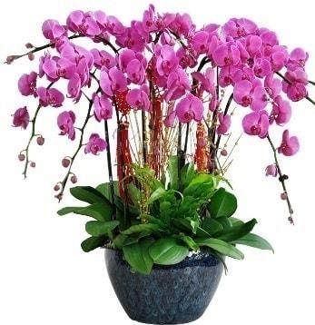 9 dallı mor orkide  Kırklareli çiçek , çiçekçi , çiçekçilik