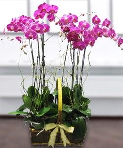 4 dallı mor orkide  Kırklareli internetten çiçek siparişi