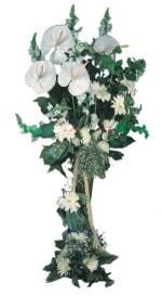 Kırklareli internetten çiçek satışı  antoryumlarin büyüsü özel