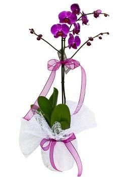 Tek dallı mor orkide  Kırklareli hediye sevgilime hediye çiçek