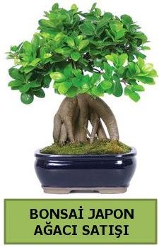 Bonsai japon ağacı satışı  Kırklareli çiçek online çiçek siparişi