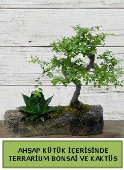 Ahşap kütük bonsai kaktüs teraryum  Kırklareli İnternetten çiçek siparişi