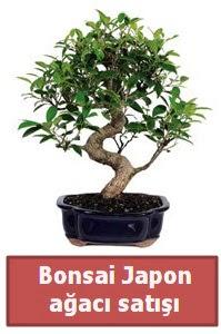 Japon ağacı bonsai satışı  Kırklareli yurtiçi ve yurtdışı çiçek siparişi