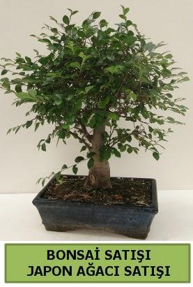 Minyatür bonsai japon ağacı satışı  Kırklareli uluslararası çiçek gönderme