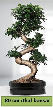 80 cm özel saksıda bonsai bitkisi  Kırklareli hediye sevgilime hediye çiçek