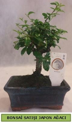 Minyatür bonsai ağacı satışı  Kırklareli anneler günü çiçek yolla