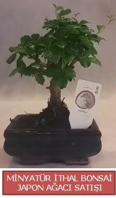 Küçük görsel bonsai japon ağacı bitkisi  Kırklareli çiçek servisi , çiçekçi adresleri