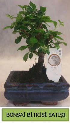 Bonsai ithal görsel minyatür japon ağacı  Kırklareli çiçek mağazası , çiçekçi adresleri