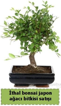 İthal bonsai saksı çiçeği Japon ağacı satışı  Kırklareli cicekciler , cicek siparisi