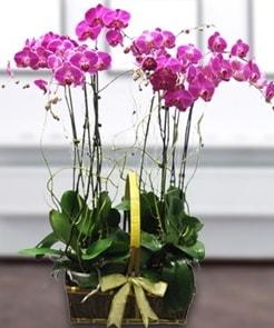 7 dallı mor lila orkide  Kırklareli uluslararası çiçek gönderme