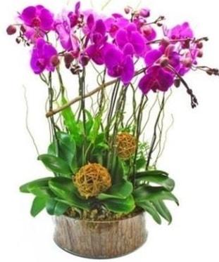 Ahşap kütükte lila mor orkide 8 li  Kırklareli online çiçekçi , çiçek siparişi