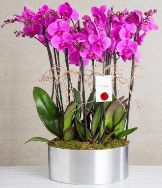11 dallı mor orkide metal vazoda  Kırklareli uluslararası çiçek gönderme