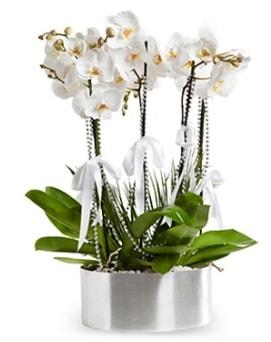 Beş dallı metal saksıda beyaz orkide  Kırklareli 14 şubat sevgililer günü çiçek