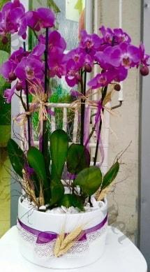 Seramik vazoda 4 dallı mor lila orkide  Kırklareli çiçek yolla