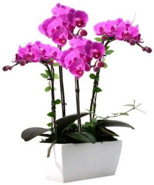 Seramik vazo içerisinde 4 dallı mor orkide  Kırklareli çiçek online çiçek siparişi