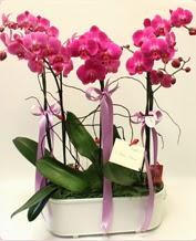 Beyaz seramik içerisinde 4 dallı orkide  Kırklareli çiçek mağazası , çiçekçi adresleri
