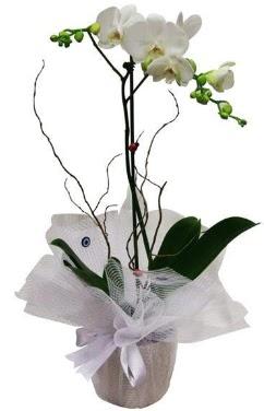 Tek dallı beyaz orkide  Kırklareli çiçek gönderme