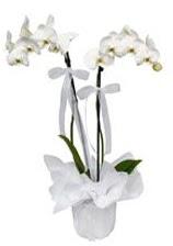 2 dallı beyaz orkide  Kırklareli internetten çiçek siparişi